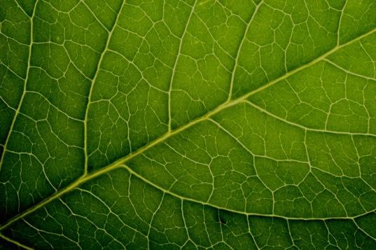 leaf-vei